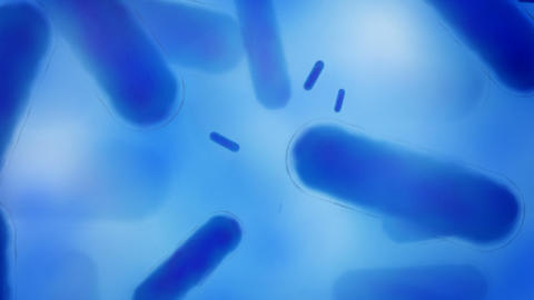 Blue bacteria Animation