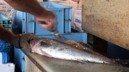 Cleaning fish with an iron brush at the Tsukiji fi Footage