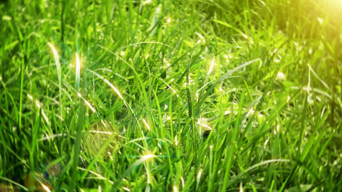 Green grass Footage