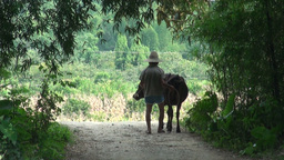 Old Man With Buffalo In Rural China stock footage