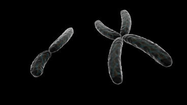 Rotation of 3D XY chromosome.medical,micro,science,dna,microbe,helix,disease,gen Animation