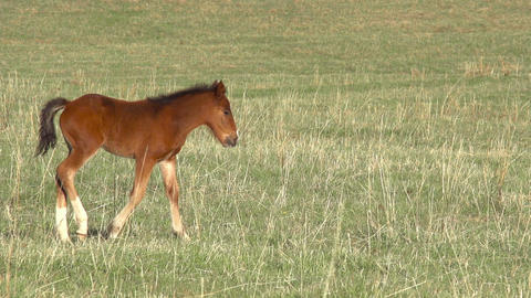Foal HD Footage