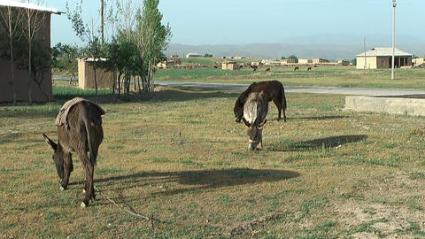 Rural Landscape In Uzbekistan stock footage