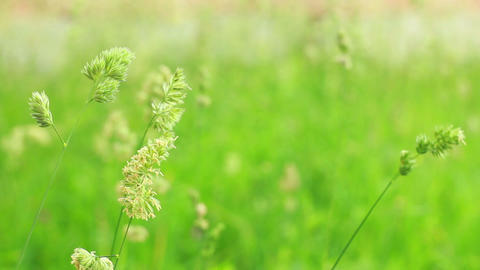 Grass 4 stock footage