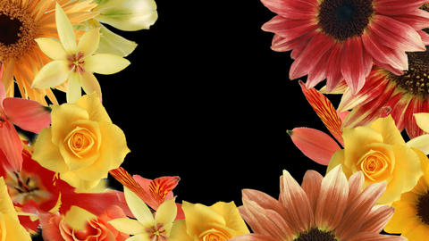Flower7132791 Animation
