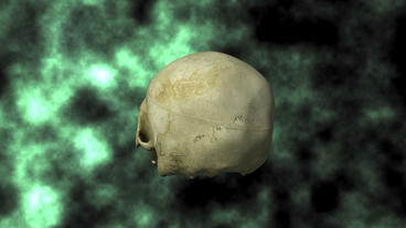 Actual Human Skull, 3D Scan, rotating on BG 24P Animation