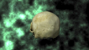 Actual Human Skull, 3D Scan, Rotating On BG 30P stock footage