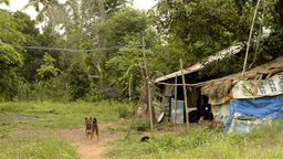A Run-Down House In Rural Thailand stock footage