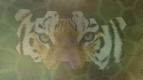 Tiger Scales stock footage