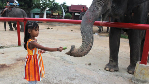 Cute Asian Girls Feeds Elephant stock footage