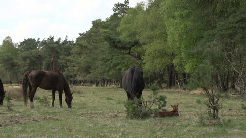 Horse Family In The Woods stock footage