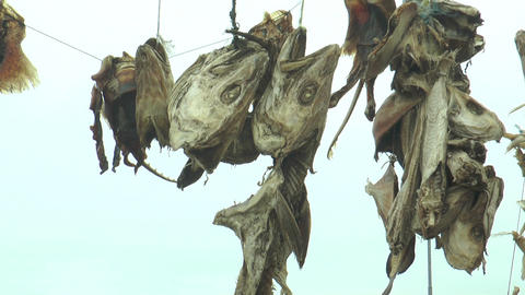 Drying Stockfish In Iceland stock footage
