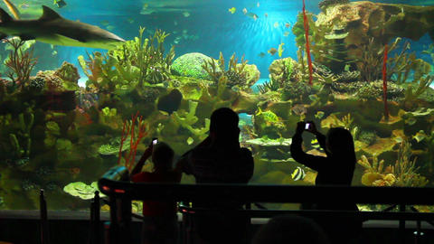 People Shooting In Oceanarium stock footage
