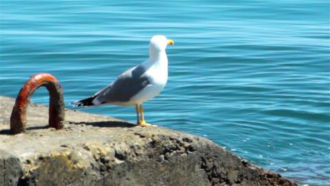 Sea Gull On The Quay stock footage