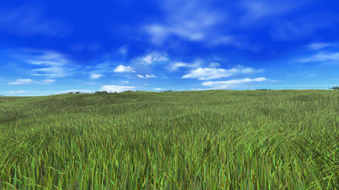 Grass A stock footage