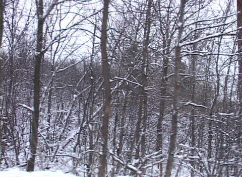 Tracking Shot Of A Snowy Landscape (1) stock footage