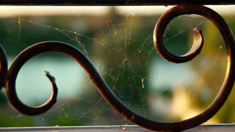 Cobweb on metal lattice Footage