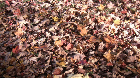 Autumn leaves rest on the ground in the sunlight (High Definition) Footage