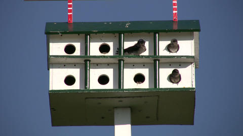 Birds Are Hanging Out In Bird Feeder Hotel (High Definition) stock footage
