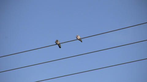 Pigeons Sitting On A Wire 1 (High Definition) stock footage