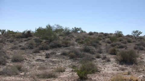 Shrubs Sit In The Desert Soaking Up Sunlight (High Definition) stock footage