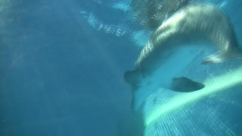 Dolphin gracefully swims under the blue sunny water (High Definition) Footage