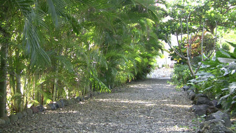 Gravel Path With Tropical Plants And Shadows (High Definition) stock footage