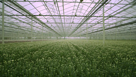 View Of Greenhouse stock footage