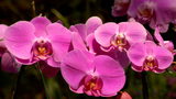 Pink Orchids Footage