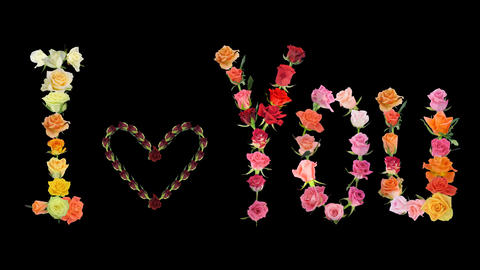 "Montage ""I Love You"" Valentine Roses Time-lapse 2x stock footage"