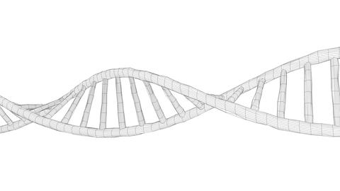 Human DNA wireframe Animation