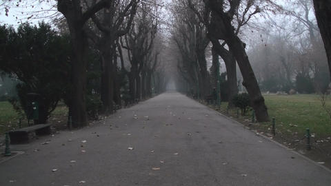 Still Shot Of A Misty Alley In Cismigiu Park stock footage