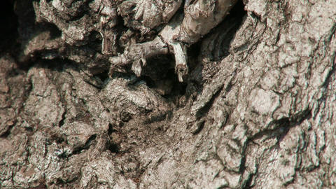 Ants On Tree Bark Spring stock footage