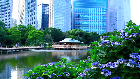 The Tea House in Hamarikyu Garden Footage