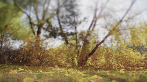 Fall Leaves Slow Motion Tilt Shift stock footage