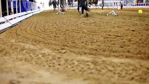 Panorama On Cossack Ride stock footage