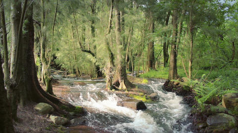 Green Forest River stock footage
