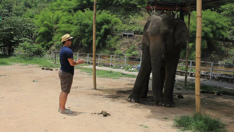 Elephant Bowing Down To Tourist Footage