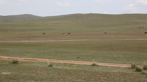 Final Horse Racing At The 2009 Naadam Festival, Mo stock footage