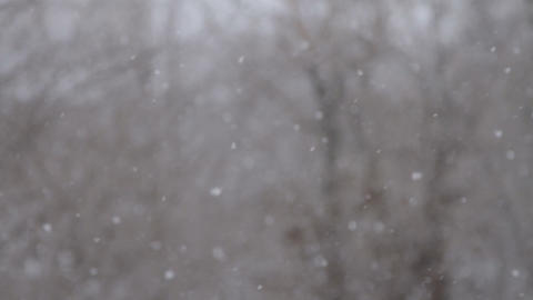 Winter. Snowfall. Snow. Christmas. Snow Flakes stock footage