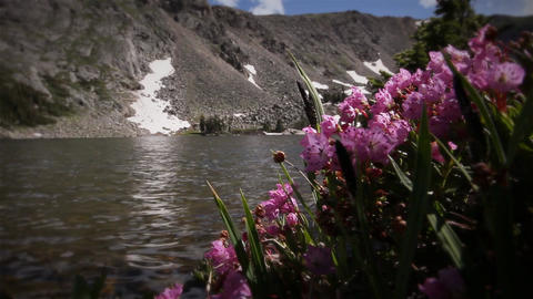 (1208) Colorado Rocky Mountains Alpine Wildflowers Summer Tourism Lake Outdoors Nature Footage