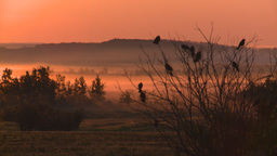 HD2008-7-1-10 sunrise fog birds Footage