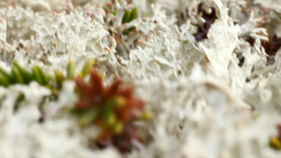 macro world polar plant the white dead dry Footage