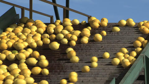 Lemons Factory stock footage