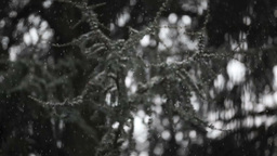Winter Time Snow With Trees In The Background stock footage