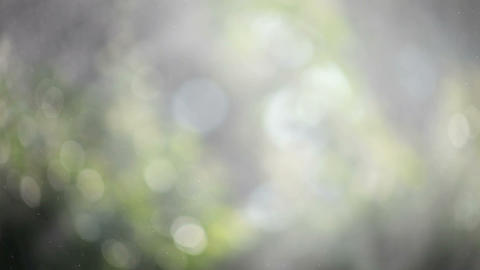 Water Vapor In A Garden stock footage
