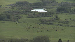 HD2009-7-10-28RC Cattle At Bottom Of Valley stock footage