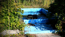 Abandoned Pool In Bushes stock footage