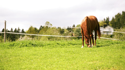 Tilt Shoot Of Horse Grazing On Lawn stock footage
