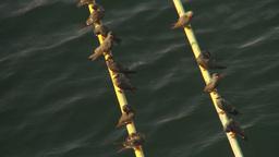 HD2009-11-19-3 Birds On Anchor Line stock footage